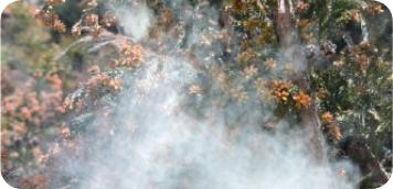 花粉・ダニアレルゲン対策