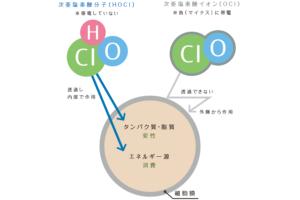 次亜塩素酸分子と次亜塩素酸イオンの違い : 細胞への作用の違い